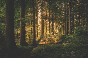 Salzwedel verkauft wertvollen Feuchtwald