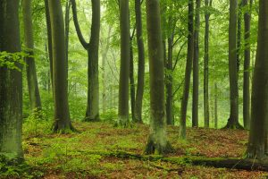 Waldvision: mehr Klimaschutz mit Deutschlands Wäldern