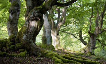 Ein alter Baum mit Moos bedeckt