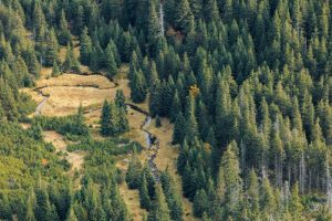 Wald aus der Vogelperspektive