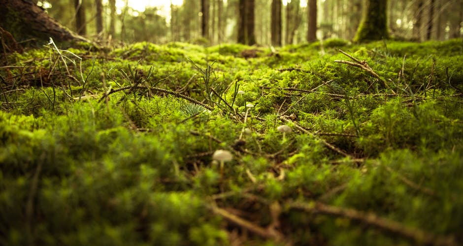 naturwald-akademie.org