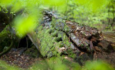 Ein Baum liegt am Boden und verrottet