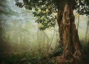 alter Baum im Nebel