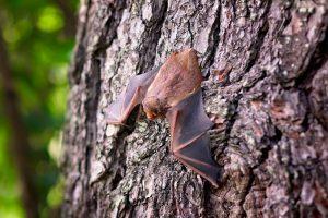 Fledermaus an Baum