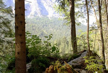 Zauberwald Berchtesgaden