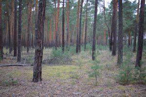 Alternativer Waldzustandsbericht: Deutschlands Wäldern geht es schlecht