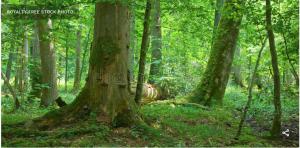 Mitteleuropäischer Wald