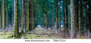 Naturferner Fichtenwald