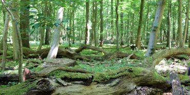 Totholz im Stadtwald von Lübeck