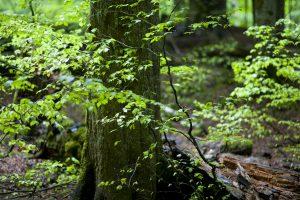FFH-Richtlinien für Wald sind an Forstwirtschaft orientiert