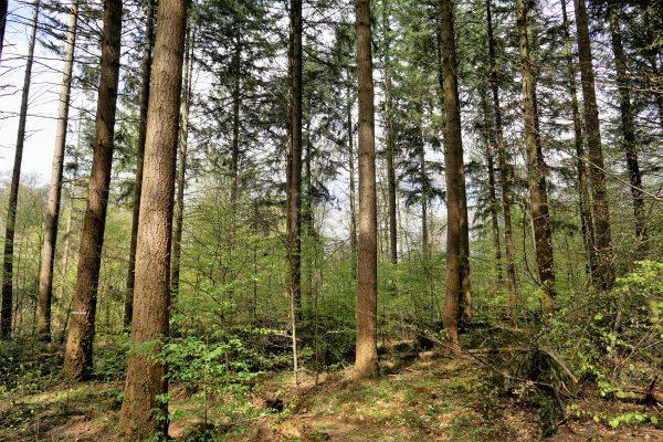 Fabelhaft Mischwälder sind Monokulturen ökologisch und ökonomisch überlegen &XI_11