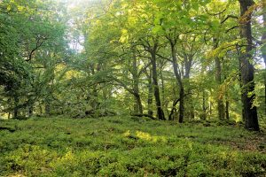 Der besondere Wert von intakten Waldökosystemen
