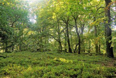 Trockener Eichenmischwald