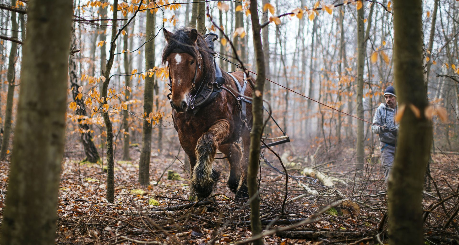Pferd Pit im Einsatz