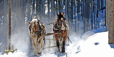 Pferde ziehen Holz