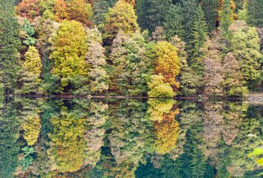 Wald mit See in Norditalien