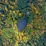 See im Wald