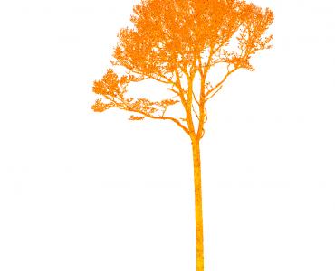 Laserscan eines Baums