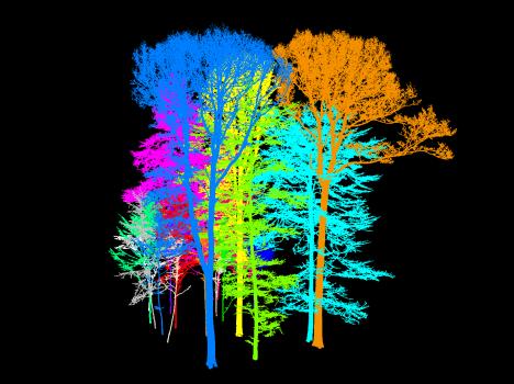 Laserscan von Bäumen