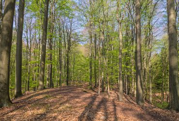Wanderweg in Grumsiner Wald