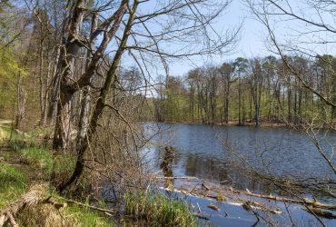Schweingartensee am östlichen Rand des Weltnaturer-begebiets