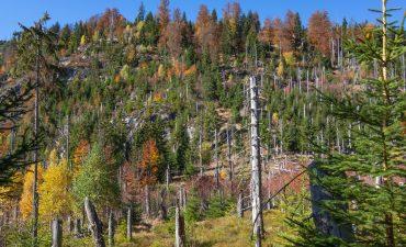Herbst am Steinfleckenberg, Bayern