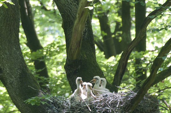 Storchenbabys