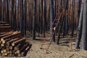 Verbrannter Wald in Brandenburg