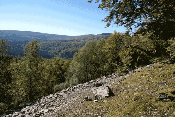 Wald am Hang