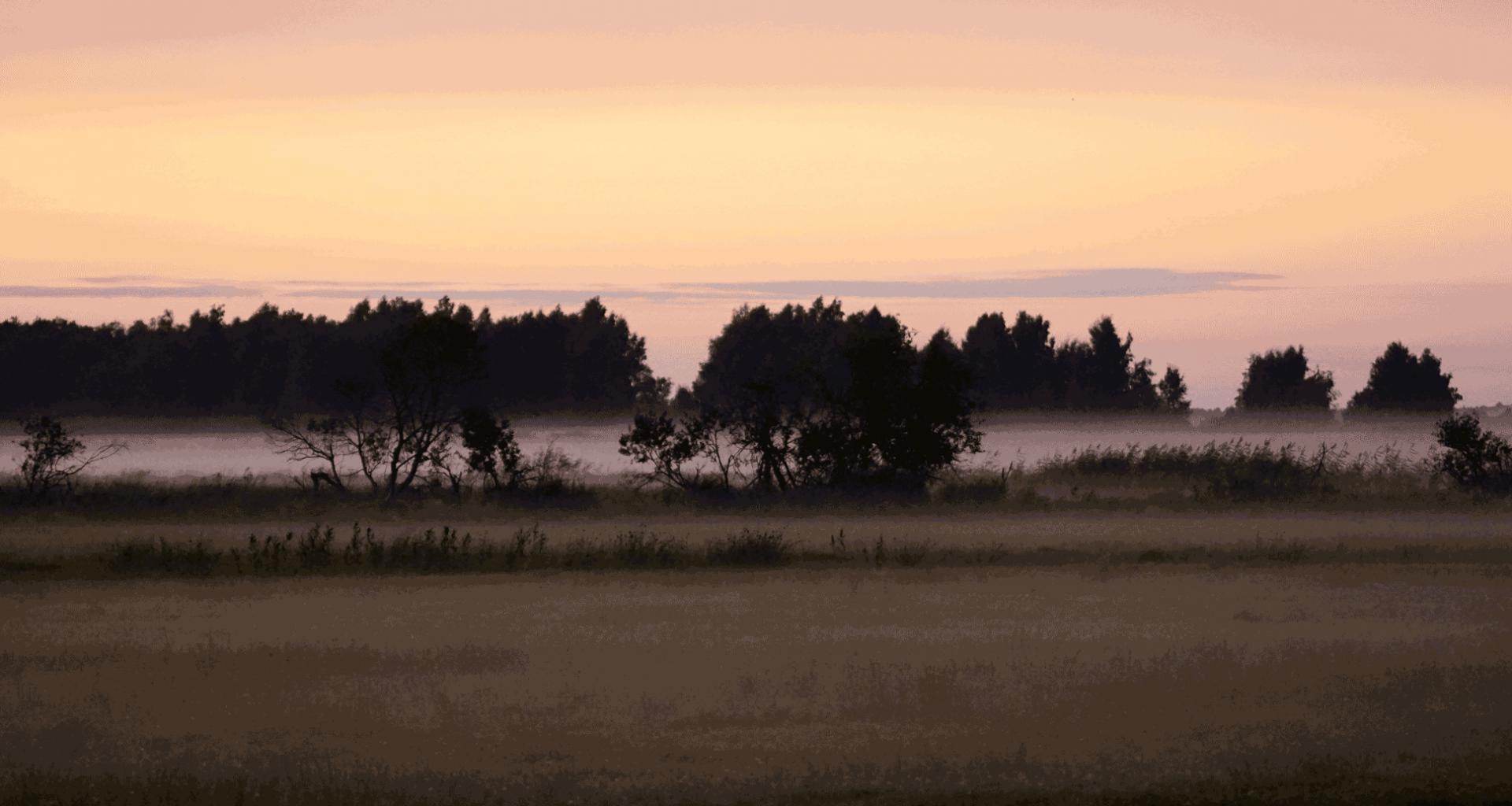 Wald im Morgennebel