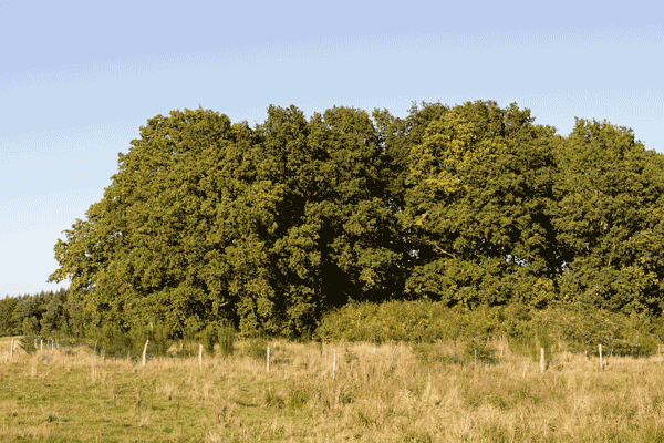 Wald an Wiese