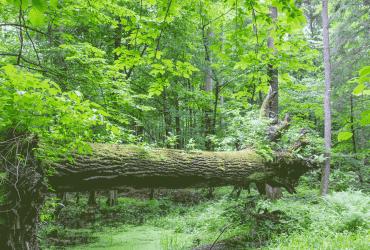 Naturwald mit Totholz