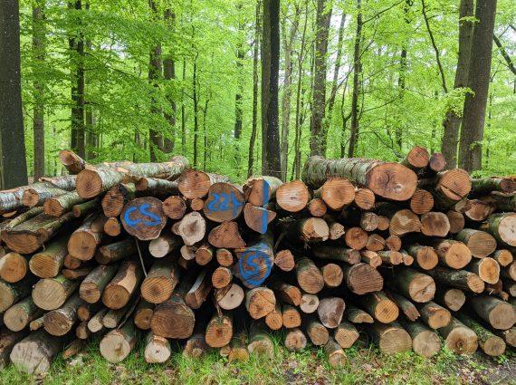 Geschlagenes Holz im Küstenwald