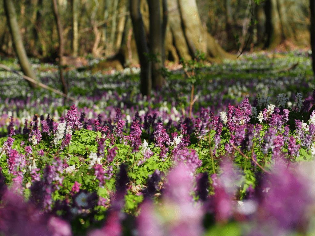 Wald mit Blüten